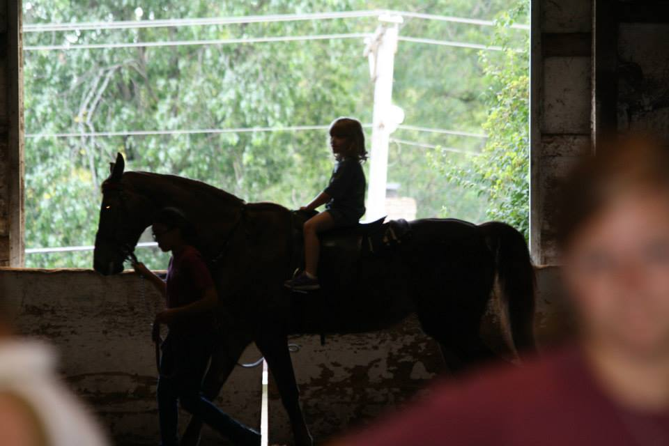 Addie_horse